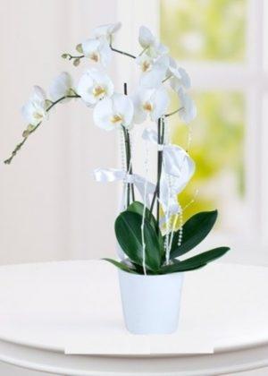 diyarbakır çiçek